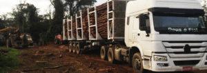 transporte-florestal-2-1-300x106 Tork Tv